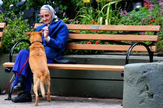 Feeding Dog.flickr.edyourdon.cc by-sa 2.0